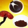 批发灵芝孢子粉 质量保证 含量高