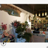 水培花卉盆栽绿植苗木批发 无土栽培花卉干净卫生 花卉加盟开店