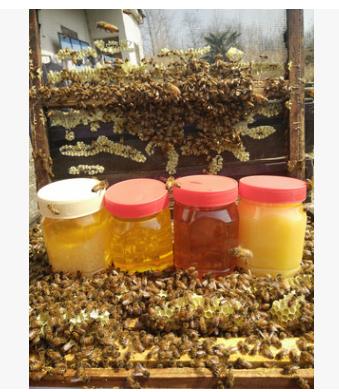1-5 蜂蜜批发 百花蜜 洋槐 枇杷 党参 枣花蜜 荆条蜜 500克
