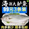 海捕新鲜大鲈鱼野生花鲈鱼寨花鱼鲈板鱼海鱼海产品青岛海鲜水产3J