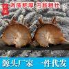 大连广岛非即食海参鲜活刺参干货野生淡水海参500g礼盒一件代发