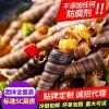 麻辣钉螺罐装 鲜活麻辣海瓜子开罐即食小海鲜 海鲜熟食香辣大海锥