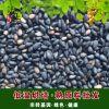 厂家直销 原料烘培芝麻烘培食品五谷杂粮熟黑芝麻低温烘焙黑芝麻