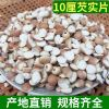 现货供应10厘芡实片鸡头米500g装肇庆半开熟红皮芡实米碎批发